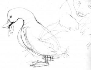 Ruff-Duck752