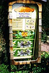 Butterflies Display