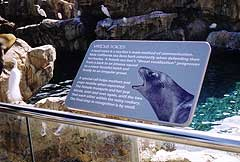 Sea Lion Sign